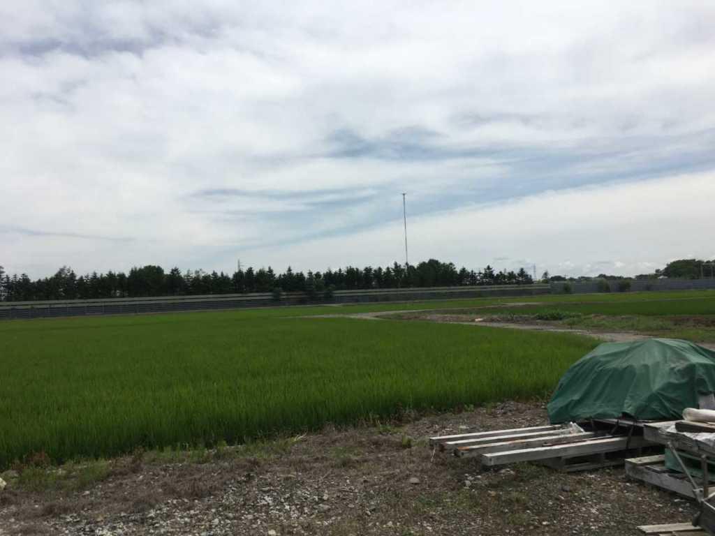 水田を望む、事務所前の風景